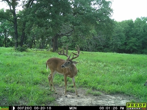 Trail Cams - Texas